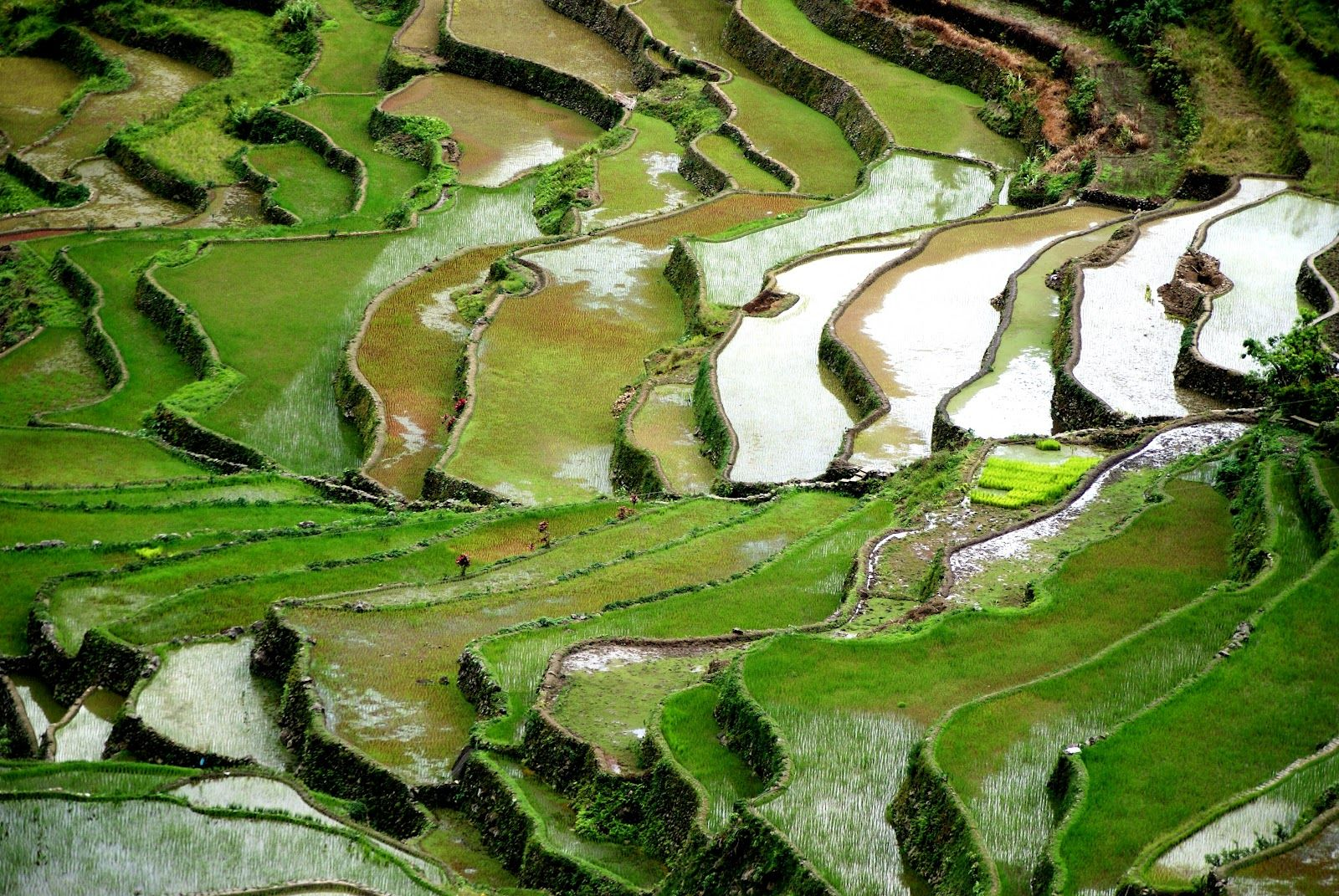 The Banaue Rice Terraces is one of the UNESCO World Heritage sites in the Philippines.