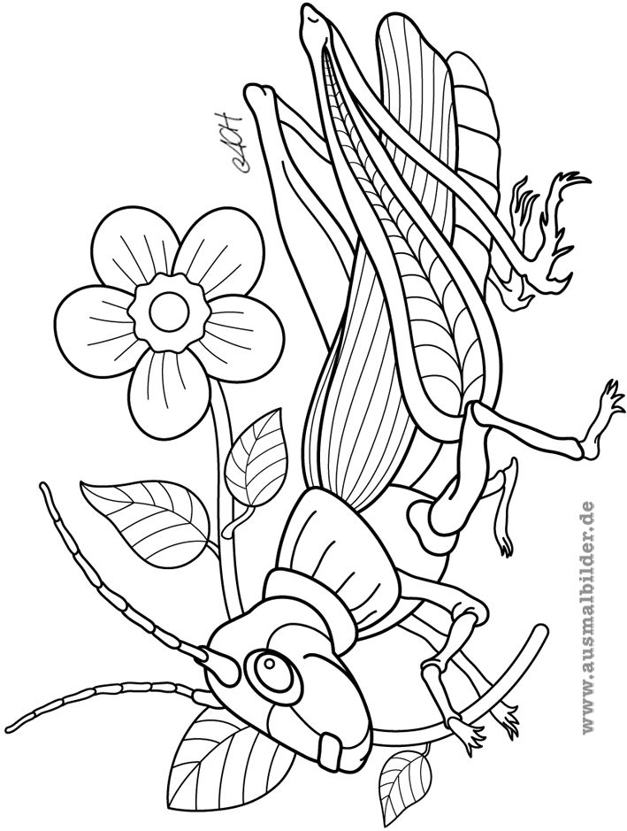grashuepfer.jpg (709×939)