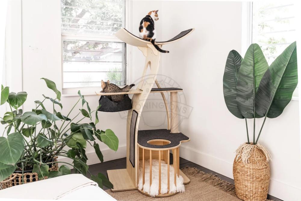 Jungle Gym Cat Tree Condo Cat Tree Condo Modern Cat Tree Cat Tree Designs