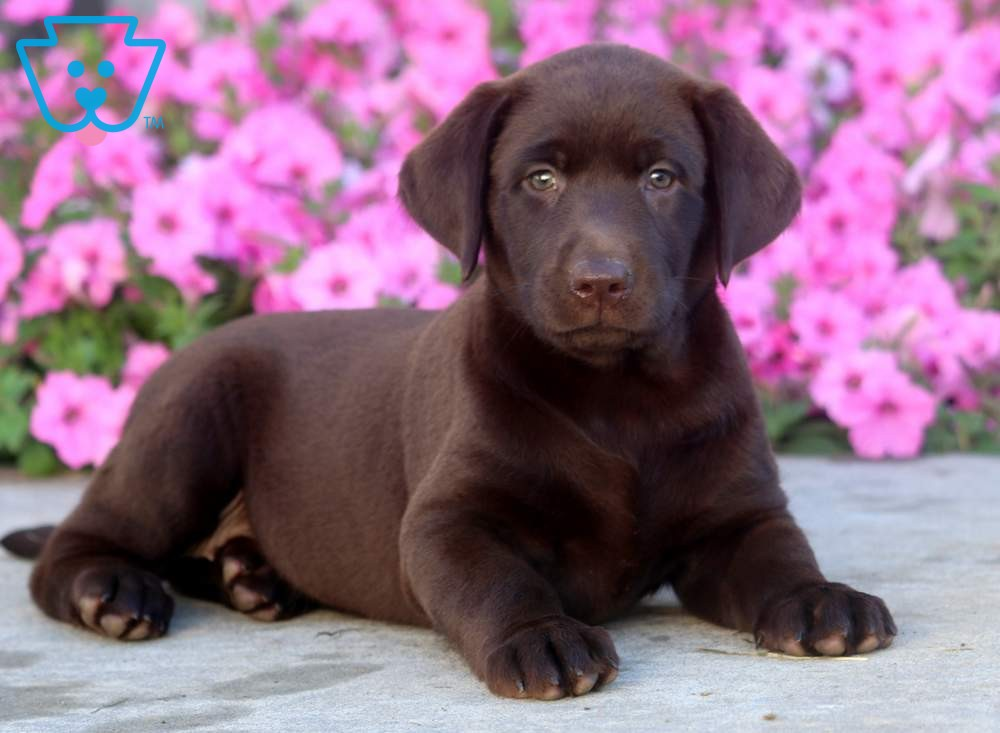 Flower Cute Dogs And Puppies Newborn Puppies Lab Puppies