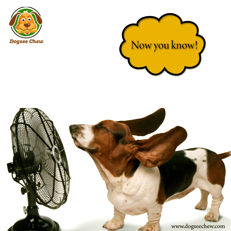 Its a fan!! Probably cooling off after all the excitement of seeing a bowl full of ‪#‎dogseechew‬. smile emoticon