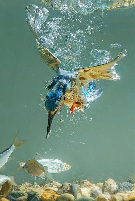 all animals in 2020  natur tiere vögel fotos hübsche vögel