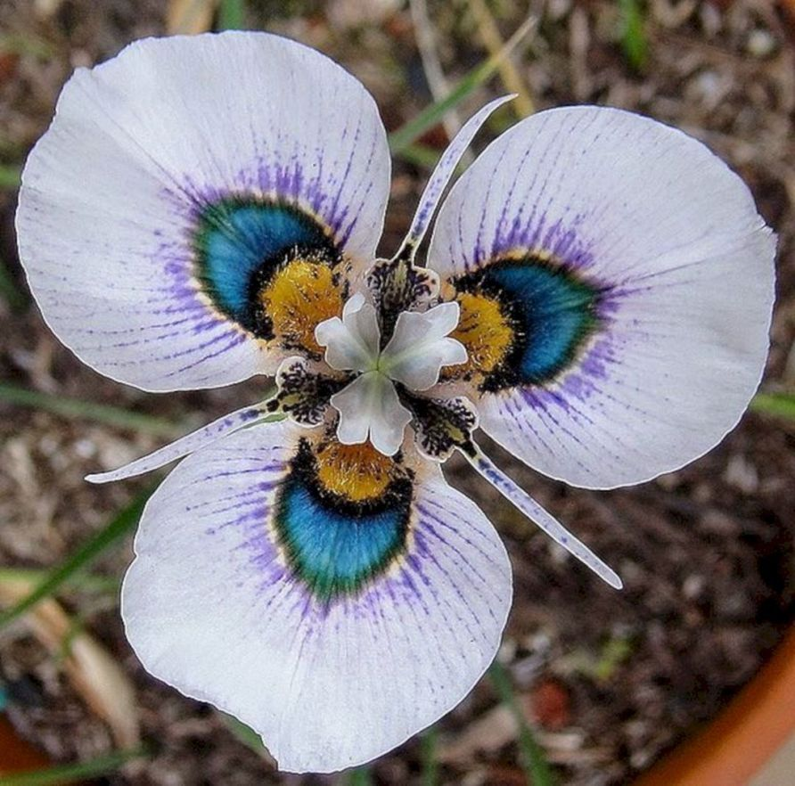 Beautiful And Unique Flower You Should Have In Your Garden 480 Unusual Flowers Rare Flowers Orchid Seeds