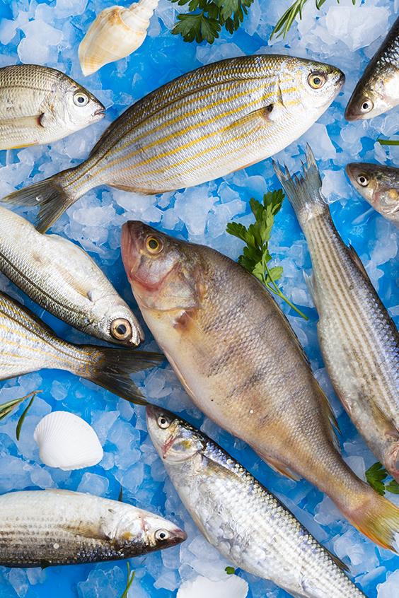كيف نتأكد من أن السمك طازج وصالح للأكل Fish Food Meat
