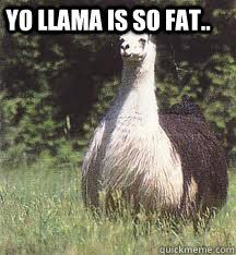 That Llama Isnt Fat That Llama Is Husky My Life Fat Animals