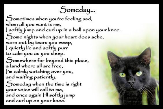 Beautiful Black Cat Memorial Pet Loss Bereavement Rainbow ...