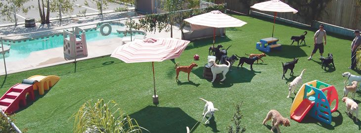 Dog Boarding Daycare In Santa Barbara Ca Dioji K 9 Resort