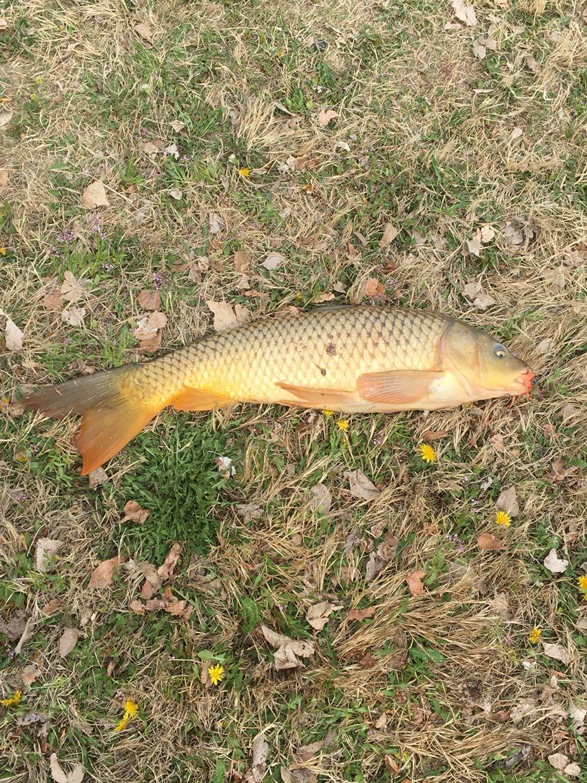 #carp fishing