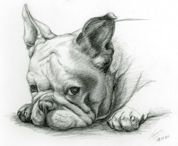 French Bulldog Playful And Smart Hund Zeichnungen
