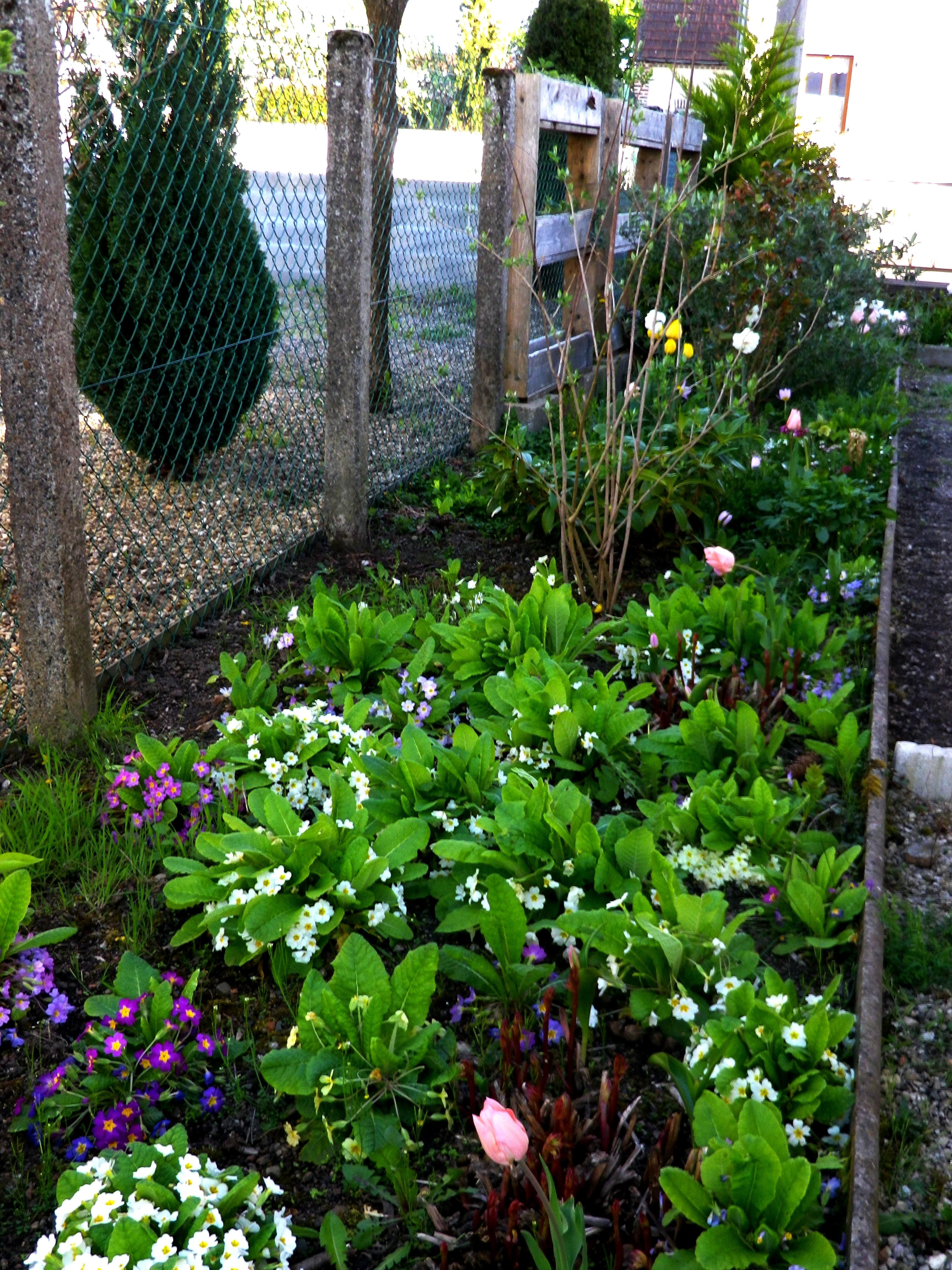 4 Seasons Permaculture Garden. Learn during what season the flowers bloom and their names