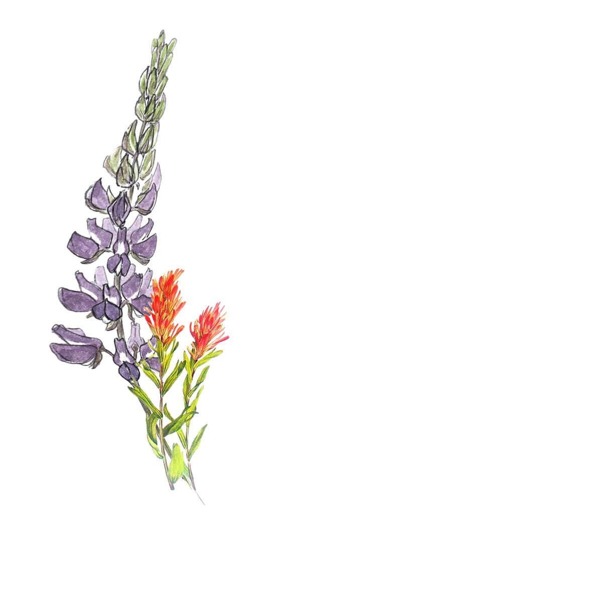 Lupine And Indian Paintbrush Tattoo For My Ribcage Paintbrush