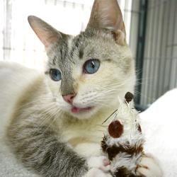 Adopt Suri On Animals Cats Kitty
