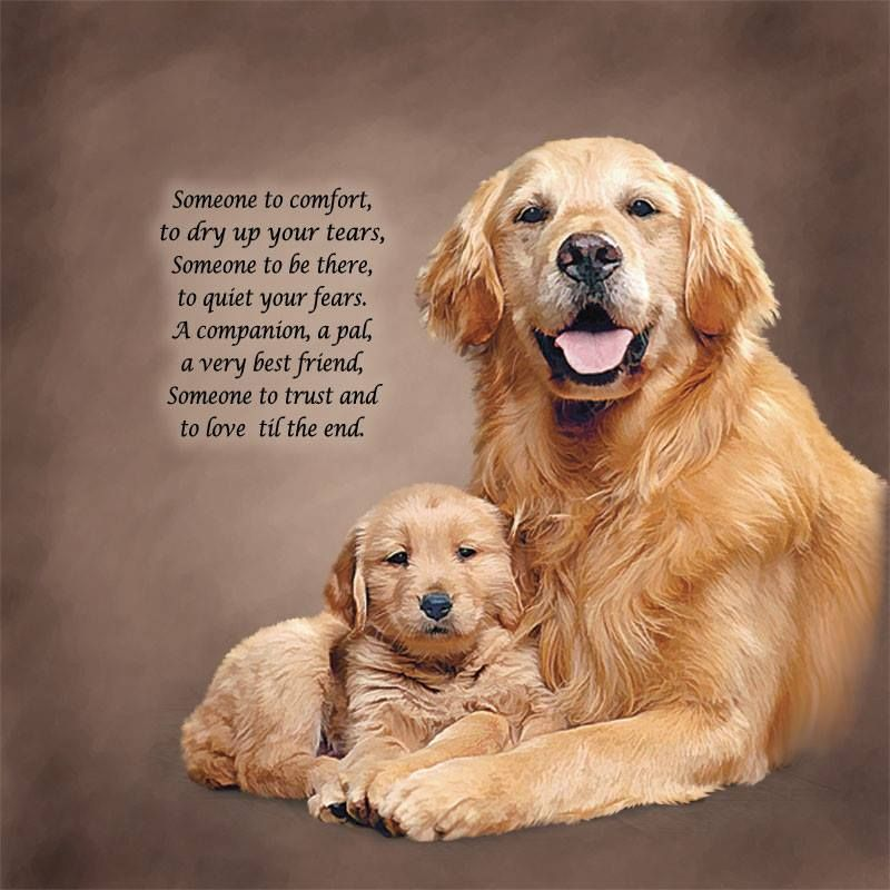 Thanks To Rescue A Golden Of Arizona For This Beautiful Image