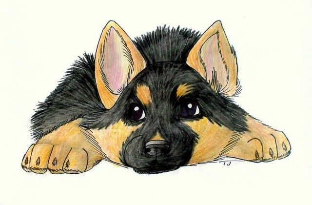 Funny German Shepherd Cartoon Picture German Shepherd Art Dog