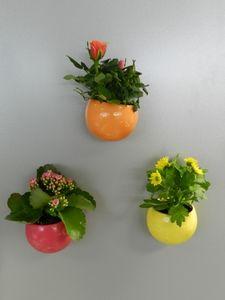 plante fleurie cache pot magn tique une maison qui sent bon pinterest planter des fleurs. Black Bedroom Furniture Sets. Home Design Ideas