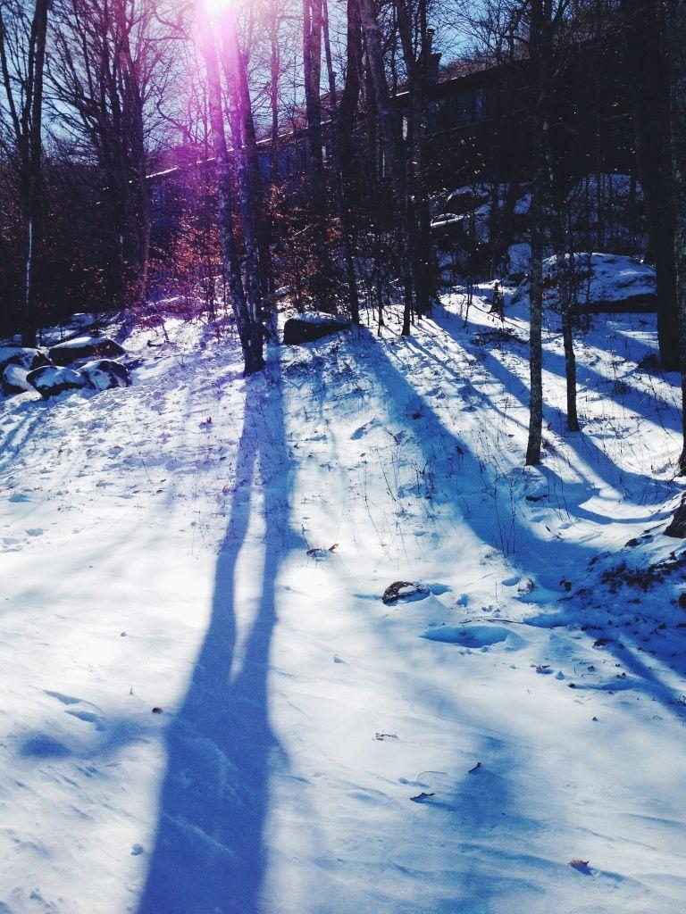 16++ Straight line animal tracks in snow ideas