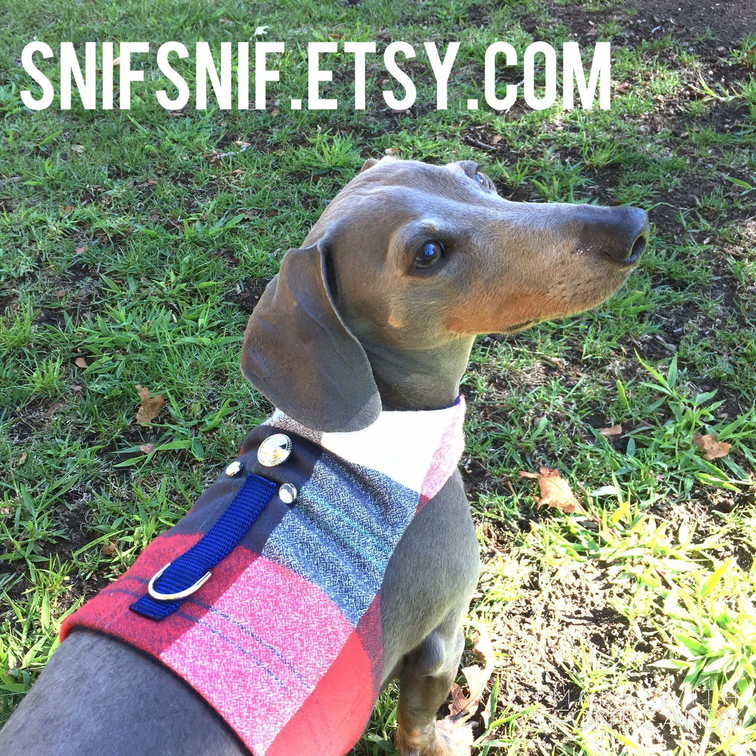 Modern No Choke Dog Harness Luxury Designer Pet Accessories