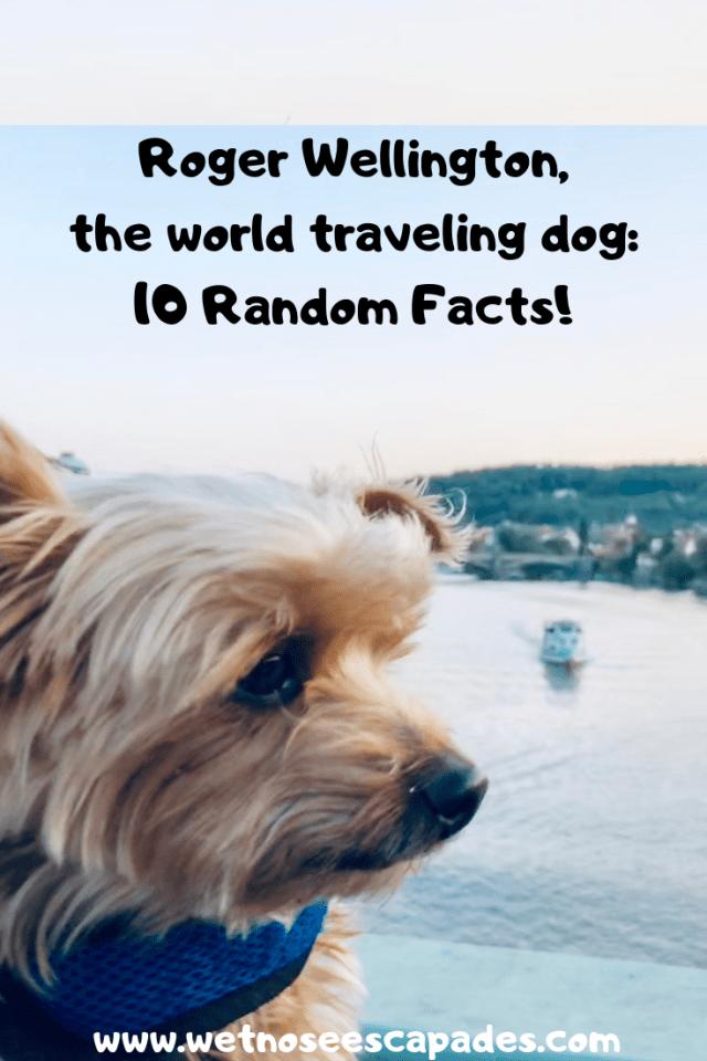 Roger Wellington The World Traveling Dog 10 Random Facts Travel Dog Travel Healthy Travel