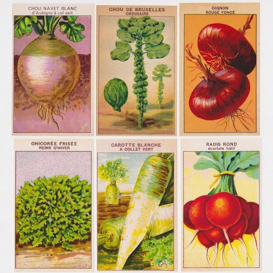 72 Vintage French Vegetable Seed Packet Labels