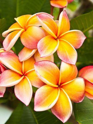 Картинки тропические цветы