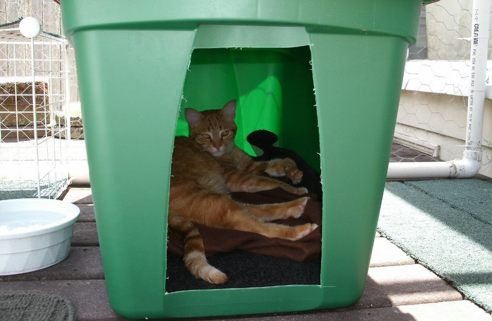 Help Out A Feral Cat By Making This Cheap And Easy Shelter Video Outdoor Cat House Feral Cats Outdoor Cat Shelter