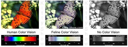Cat Color Vision Cat Vision Eyesight and How Cats See