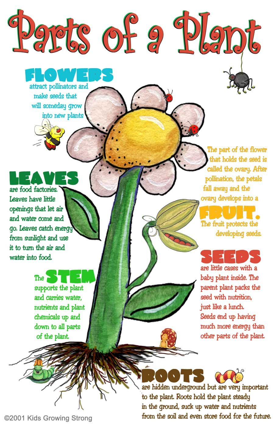 Parts of a Plant Kids Growing Strong Scienza per