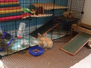 indoor rabbit housing rabbit housing pinterest rabbit rabbit rh pinterest com