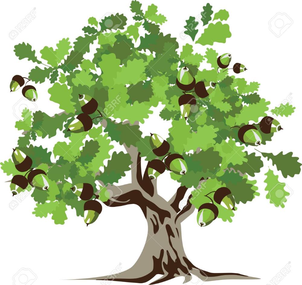 Big Green Oak Tree Illustration Oak Tree Drawings Tree Illustration Tree Drawing
