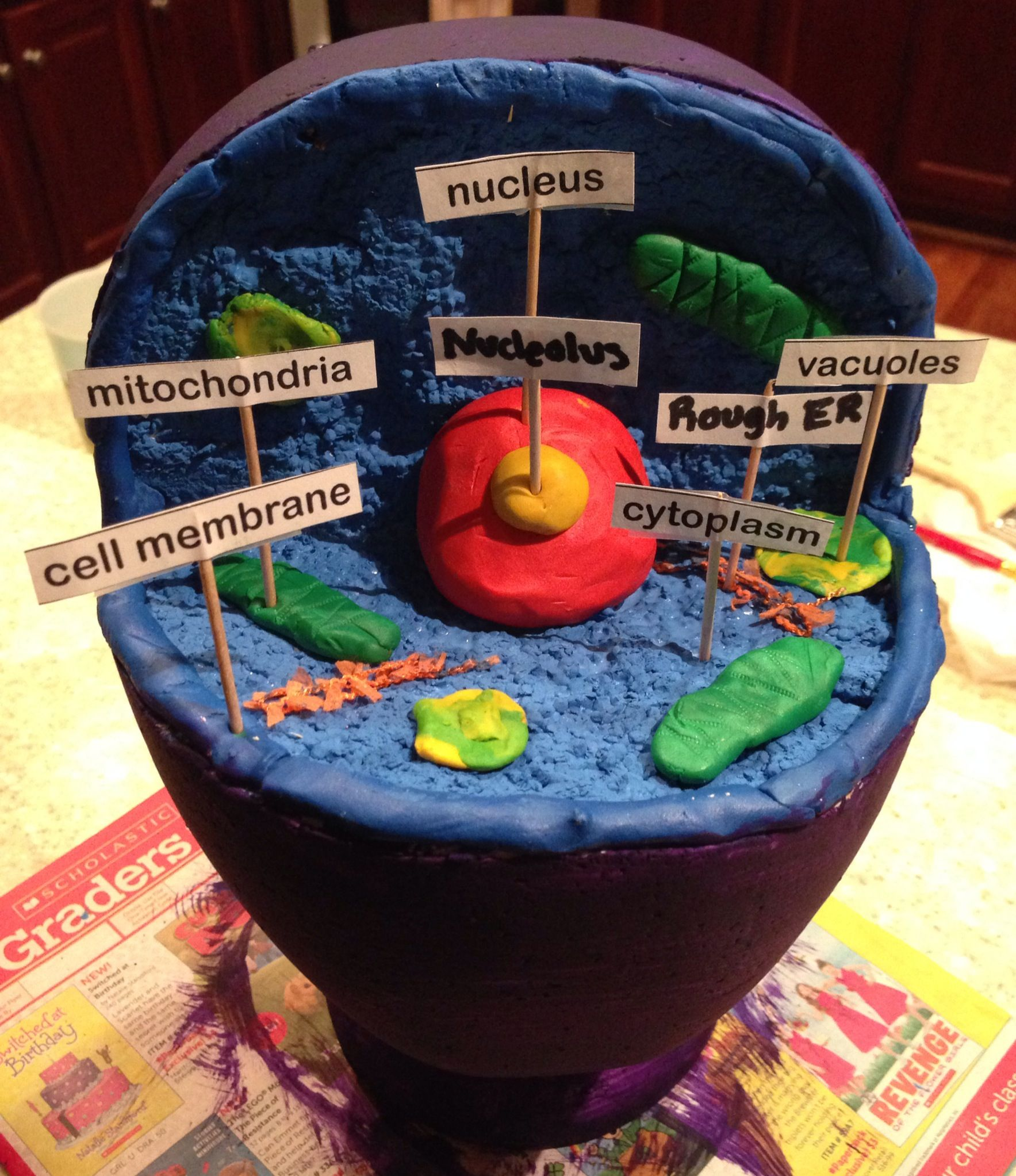 How To Make A Cell Diagram Where Is Your Appendix Animal 3d Model Used Styrofoam Head From Hobby