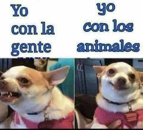 Yo Con Los Animales Xd Memes Divertidos Humor Divertido Sobre Animales Memes Perros