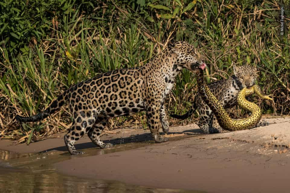 Wildlife Photographer Of The Year Lumix People S Choice Shortlist 2019 In Pictures Animals Wildlife Wildlife Photography