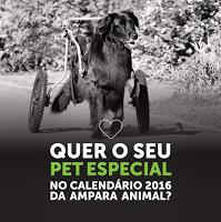 """""""O GRITO DO BICHO"""": Cães e gatos com deficiência física terão espaço n..."""