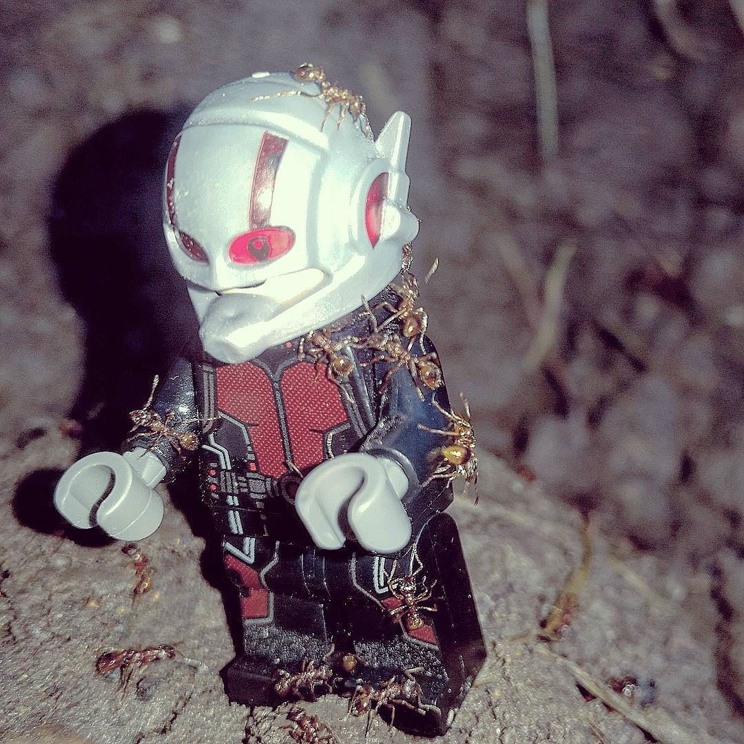 Has anybody seen Anthony?  #Antman #SouthWalesLegoGroup #legophotography #legostagram #toplegophoto #toptoyphotos #legoart #legomarvel #bricknetwork #waleslego #legostagram #Ant #noantswereharmedinthemaking by snikt87