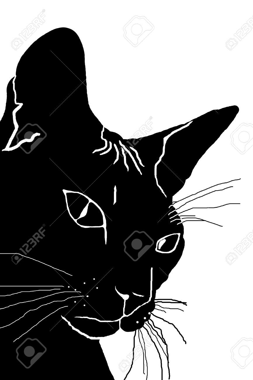 Silhouette Of The Head Of A Cat A Black Silhouette White Background Black Silhouette White Background Silhouette