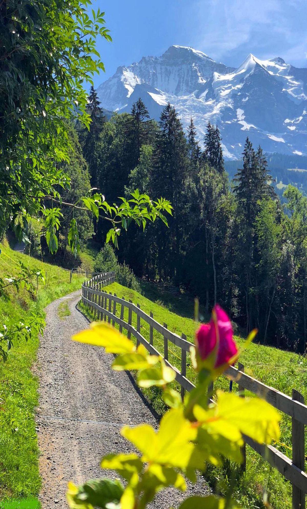 la nature  nous offre de belles images  certainement les quatre saisons profitons  ont