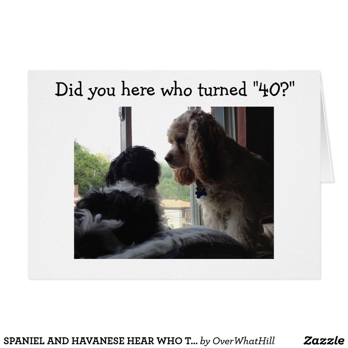 Spaniel And Havanese Hear Who Turned 40 Card Turning 40