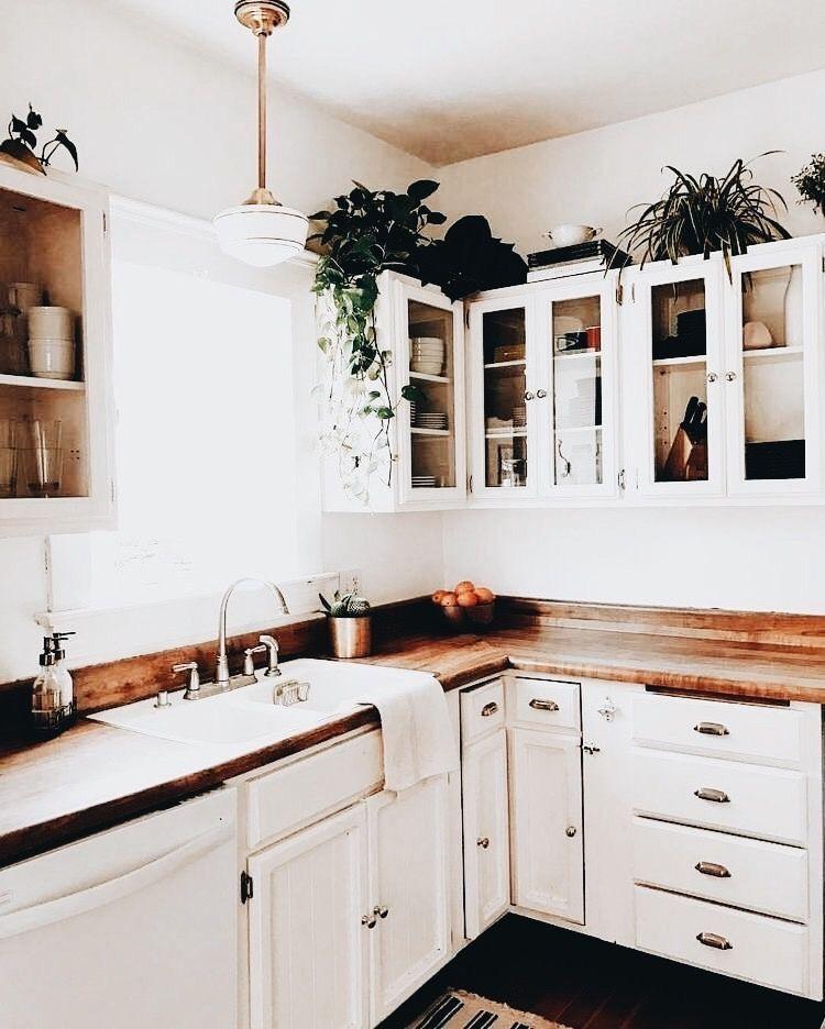 Plants Above Kitchen Cabinets