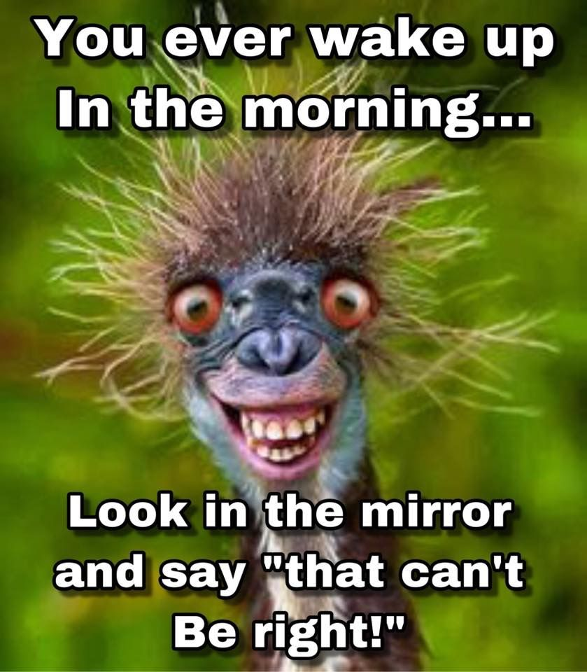 Have You Ever Looked In The Mirror And Said That Can T Be Right Morning Quotes Funny Funny Good Morning Quotes Funny Animal Faces