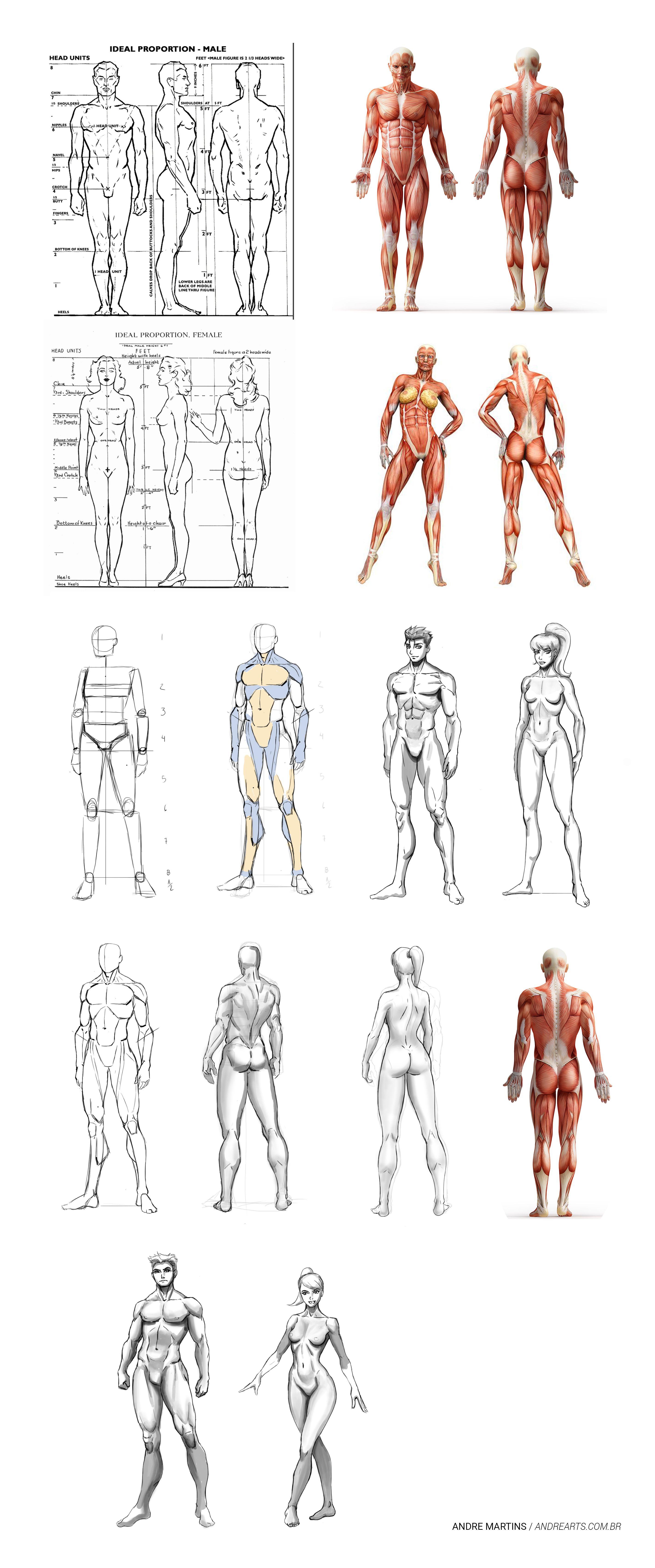 Corpo humano masculino anatomia