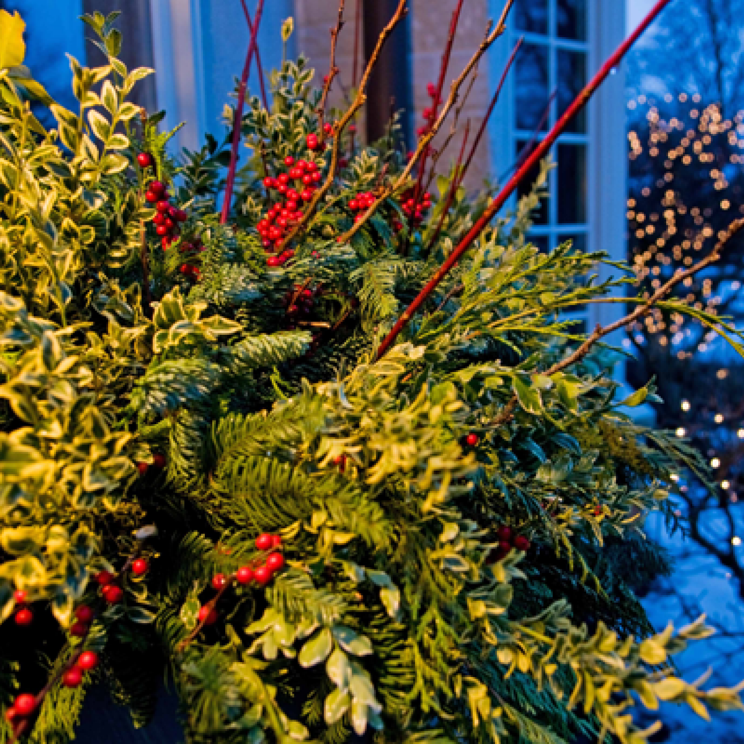 Holiday outdoor decorating tips from mariani landscape seasonal
