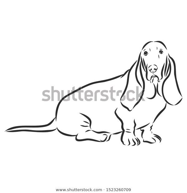 Basset Hound Dog Sketch Contour Vector เวกเตอร สต อก ปลอดค าล ขส ทธ 1523260709 ภาพประกอบ