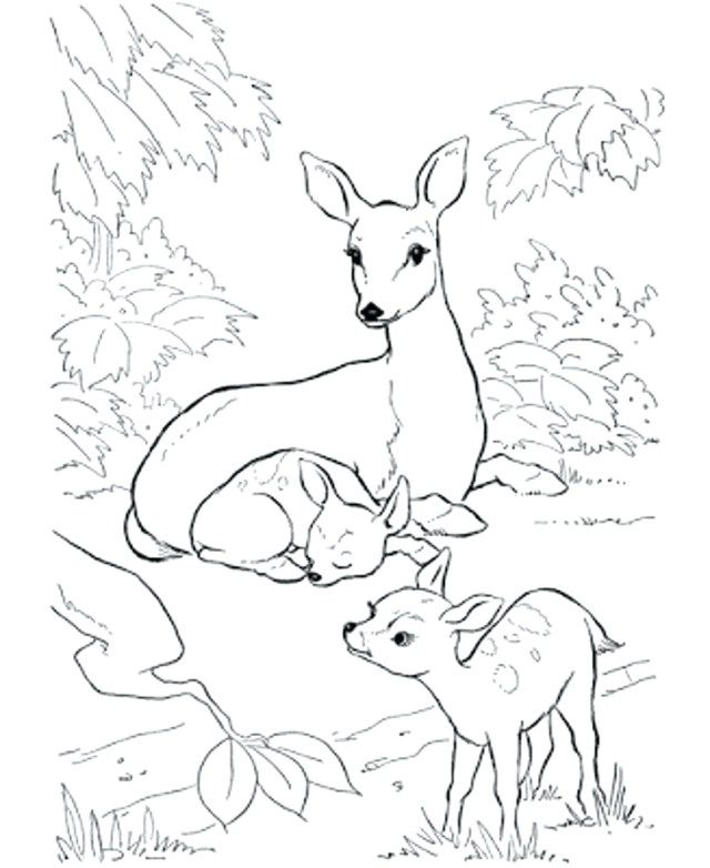 Awesome Image Of Hunting Coloring Pages Albanysinsanity Com Deer Coloring Pages Animal Coloring Books Animal Coloring Pages