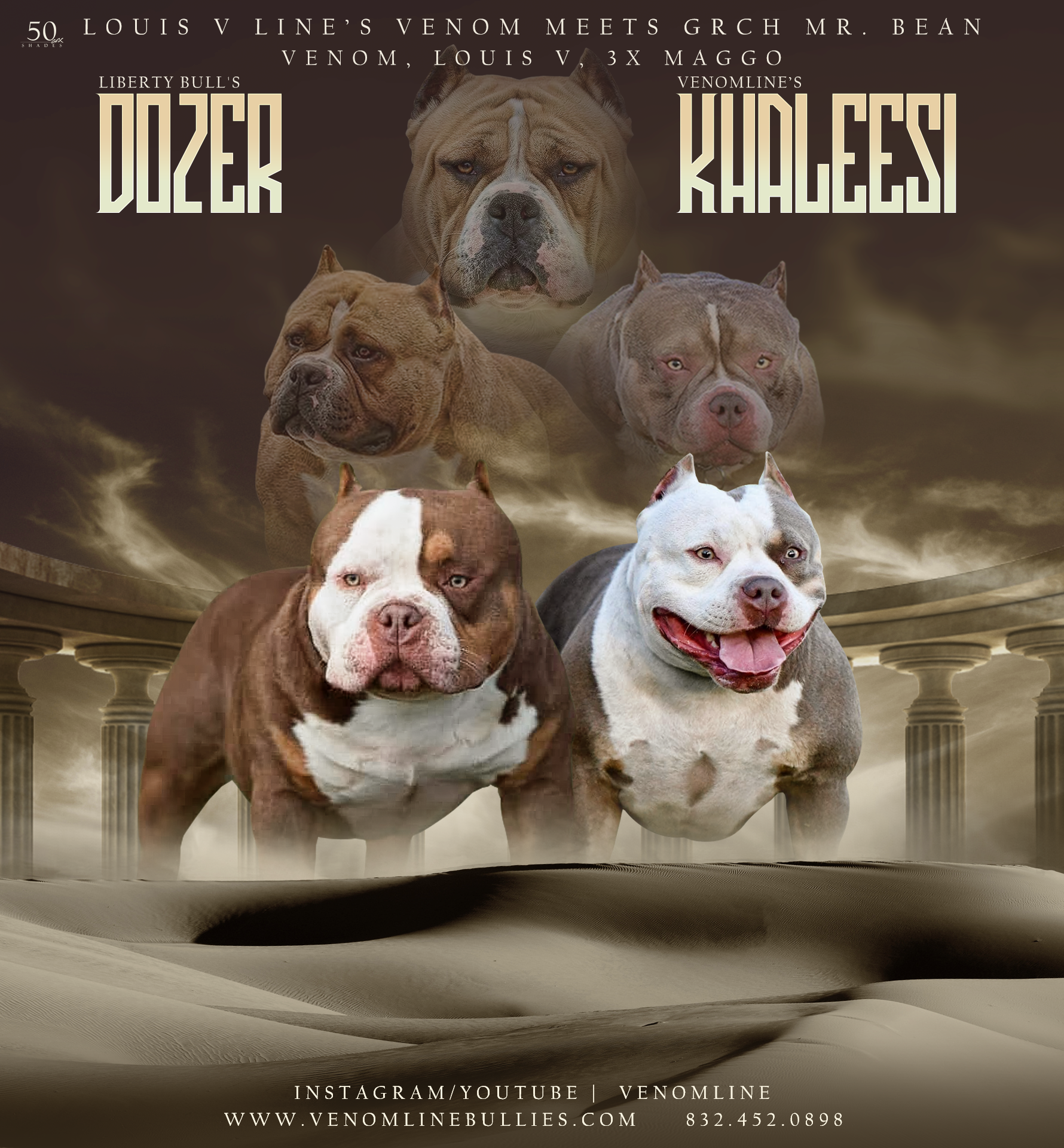 Pocket American Bully Puppies For Sale Upcoming Breedings Venomline In 2020 Puppies For Sale American Bully Pocket Bully