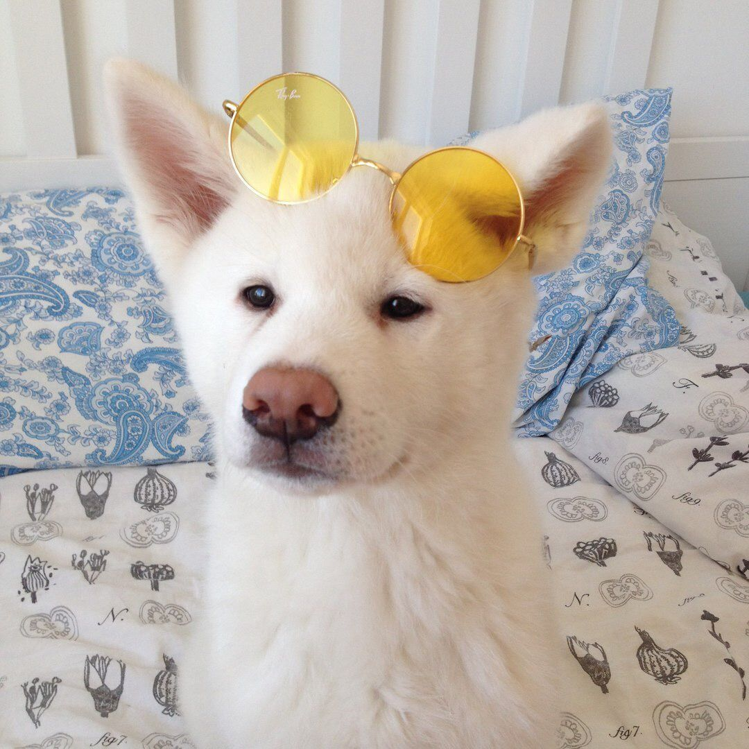 Because Who Doesn T Love A Dog Wearing Yellow Colored Sunglasses Cute Animals Puppies Animals