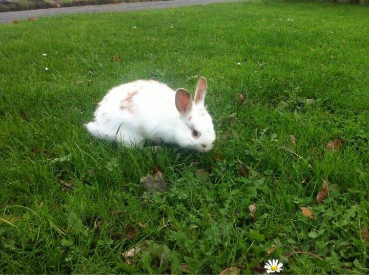 Wie in Medemblik is zijn of haar konijntje kwijt