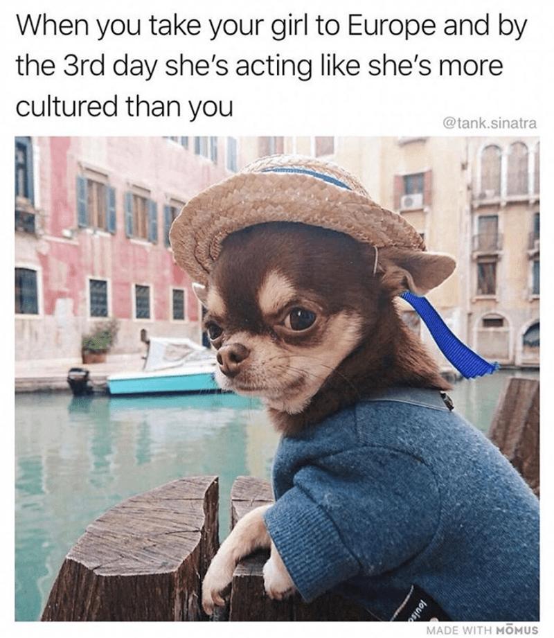 No Idea Meme Dog