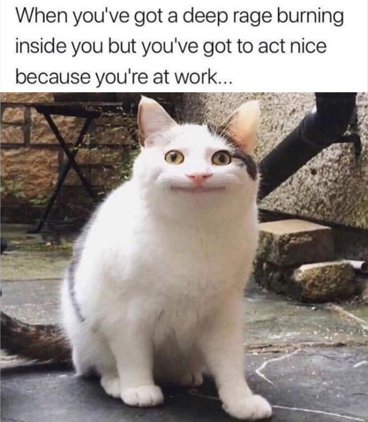 Afternoon Funny Meme Dump 37 Pics | Funny animal memes, Funny animals,  Funny cats