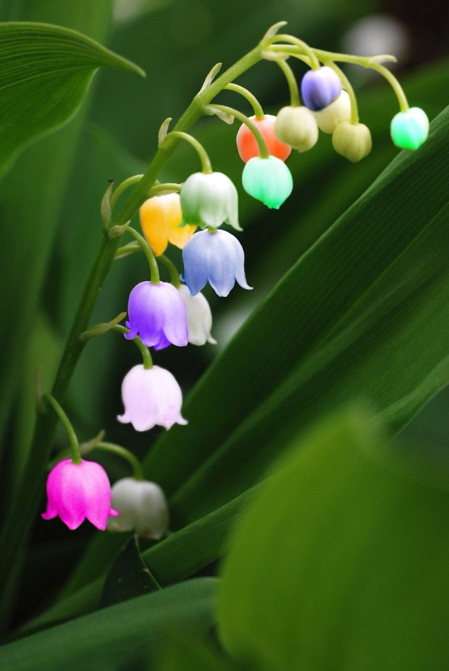 Lilly Of The Valley Arty Lily Of The Valley Flowers Valley Flowers Spring Flowers