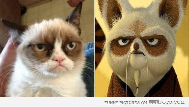 Look alike: Grumpy cat and Master Shifu - Funny grumpy cat looking like Master Shifu from Kung Fu Panda.